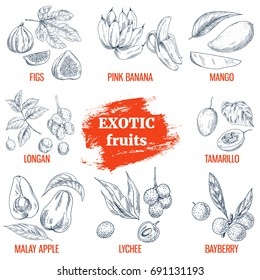 Exotic Fruits collection. Fig, pink bananas, mango, longan, tamarillo, malay apple, lychee, bayberry. Hand drawn vector illustration, vintage engraving style.
