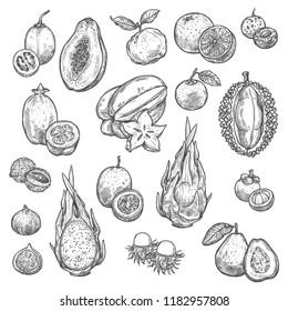 Exotic fruits and tropical berries sketches. Orange, papaya and durian, grapefruit, fig and feijoa, carambola, dragon and passion fruit, lychee, guava and tamarillo, rambutan and longan