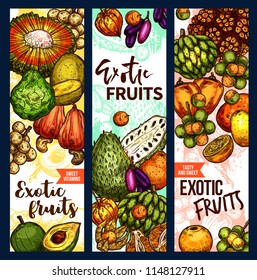 Exotic fruits and tropical fruit harvest sketch banners. Vector design of pandan, bergamot or lucuma and tangerine fruit, organic naranjilla, longkong or soursop and mombin with jambolan and physalis
