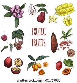 Exotic fruits, vector hand drawn collection. Carambola, acmena, malay apple, cornus kousa, finger lime, maracuja, kumquat, tamarillo