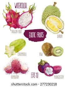 Exotic fruits. Vector watercolor illustration.