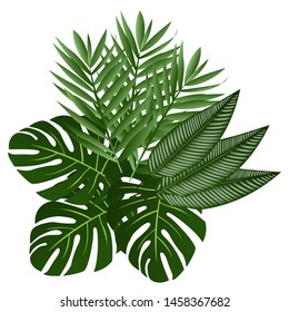 Exotic green leaves of a tropical plant on white background. Beautiful botanical isolated design element, tropic jungle palm plant, vector illustration