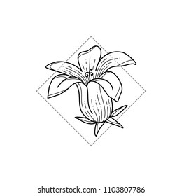 Exotic hawaii flower in geometric background. Simple icon composition. Vector illustration. Line work. Modern monochrome logotype. Nature representation.