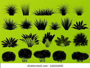 Exotic jungle bushes grass, reed, palm tree wild plants detailed silhouettes illustration collection background vector