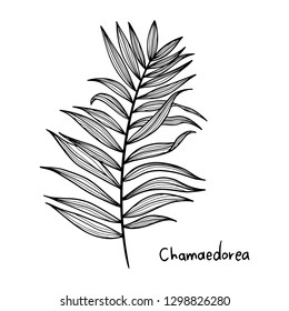 Exotic Leaf Vintage vector botanical illustration drawn by hand - Vector EPS