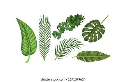 Exotic Leaves Isolated on White Background Vector Set