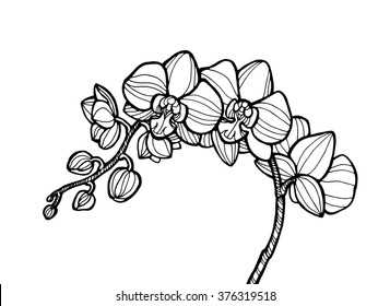 Exotic orchid flower, forest wild plant. Vector engraving botany artwork. Coloring book page for adult. Bohemia concept for invitation card, ticket, branding, boutique logo, label, emblem. Black white