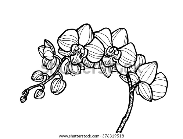 foto de Image vectorielle de stock de Fleur d'orchidée exotique, plante ...