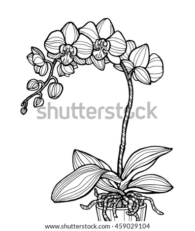 Exotic Orchid Flower Isolated Home Plant Stock Vector Royalty Free