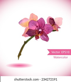 Exotic orchid flower. Vector watercolor botanic illustration