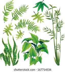 exotic plant leaves design element vector collection set