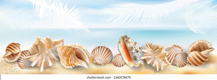 Exotic seashell mollusk on a sand beach transparent background. Vector mesh and curves illustration