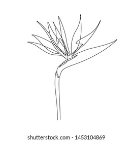 Exotic Strelitzia flower in one line art drawing style. Bird of paradise flower minimalist black line sketch on white background. Vector illustration