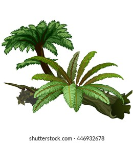 Exotic trees and fern are isolated on white background. Wildlife of the tropical jungle. Vector illustration.