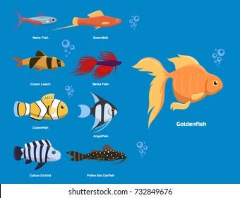 500 Freshwater Fish Pictures Royalty Free Images Stock Photos