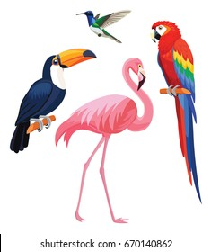 Exotic tropical birds - flamingo, toucan, hummingbird, parrot. Vector illustration.