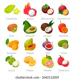 Exotic tropical fruits set with names. Sweet fleshy product of tropical plants, tasty edible fruits from foreign country. Vector flat style cartoon fruits illustration isolated on white background