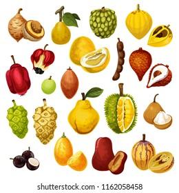 Exotic tropical fruits. Vector isolated tamarind, pepino and jackfruit or durian, salak with jujube or sapodilla and ackee apple, ambarella or jabuticaba and kumquat fruit