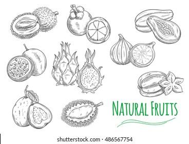 Exotic and tropical fruits. Vector pencil sketch isolated icons of durian, passion fruit maracuja, guava, dragon fruit pitaya, mangosteen, jackfruit, fig, papaya, carambola