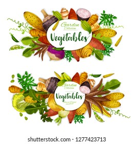 Exotic vegetables, beans and herbs with sweet potato, radish and corn, yam, celery and turnip, jerusalem artichoke, cassava and arracacia, cyclanthera, jicama and chayote. Farm veggies vector design