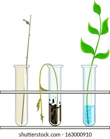 experiment with stalks in three test tubes