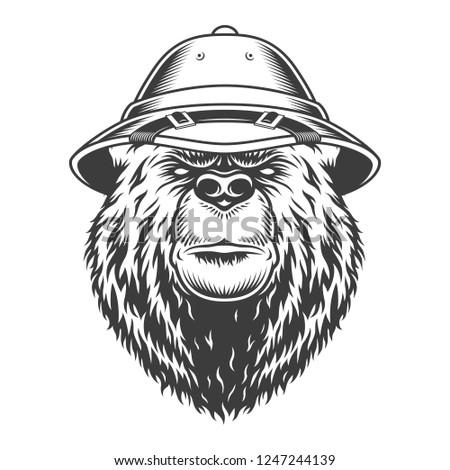 def121e1de276 Explorer bear head in safari cap in vintage monochrome style isolated  vector illustration