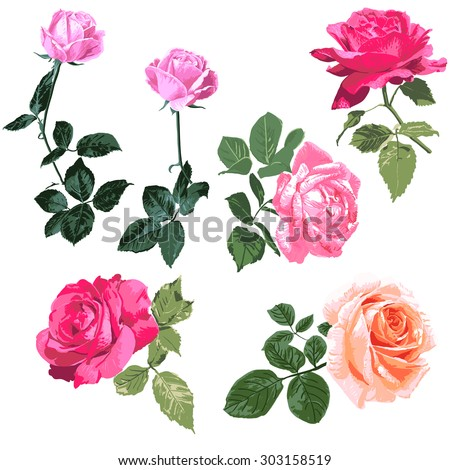 Exquisite Handpainted Roses Illustration Single Branch Stock Vector