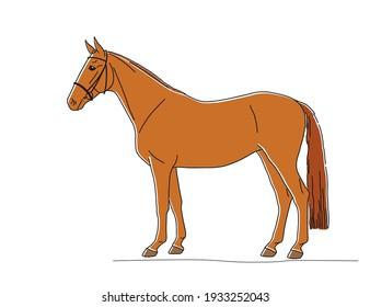 Exterior beautiful chestnut horse isolated on white background