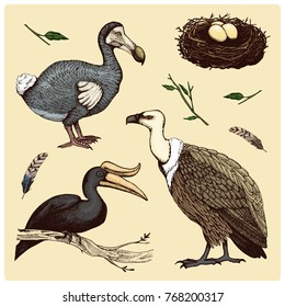 extinct species birds, griffon vultures, rhinoceros hornbill. moa, dodo and feather. engraved hand drawn in old sketch, vintage style for label. branches of trees and feathers.