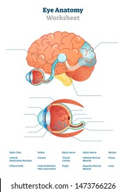 Eye anatomy blank worksheet, printable test illustrations. Brain and eye anatomical cross section diagrams. School lesson activity educational workbook page. Learn human anatomy visual task.