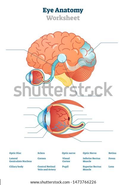 Diagram Of The Eye Worksheet
