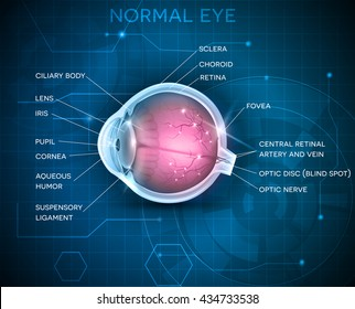 Eye anatomy on a blue technology background