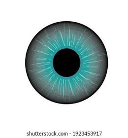 eye ball vector for business