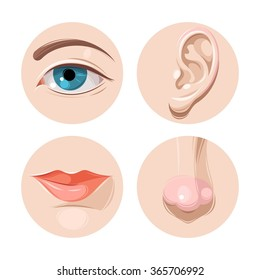 Eye, ear, mouth and nose