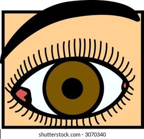 eye and eyebrow