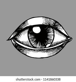 目 きれいのイラスト素材画像ベクター画像 Shutterstock