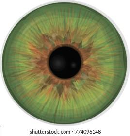 Eye iris -  Realistic vector set - Eye iris vector texture - Green.