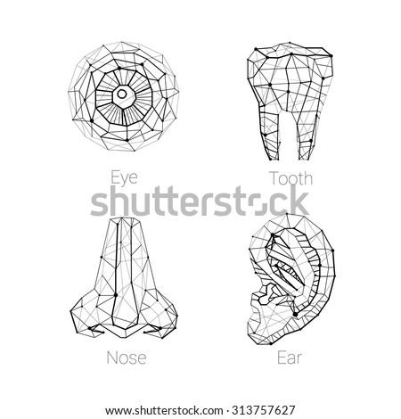 Eye Tooth Ear Nose Polygonal Carcass Stock Vector Royalty Free