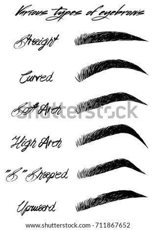eyebrow shapes various types eyebrows stock vector royalty free