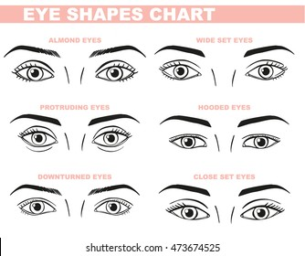 Eyes Face Chart Blank Template for Makeup Artist. Different shapes - close set, wide set, protruding. Vector illustration on white background.