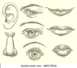 Eyes, Lips, Nose, Ear. Hand drawn engraving. Vector illustration. 8 EPS