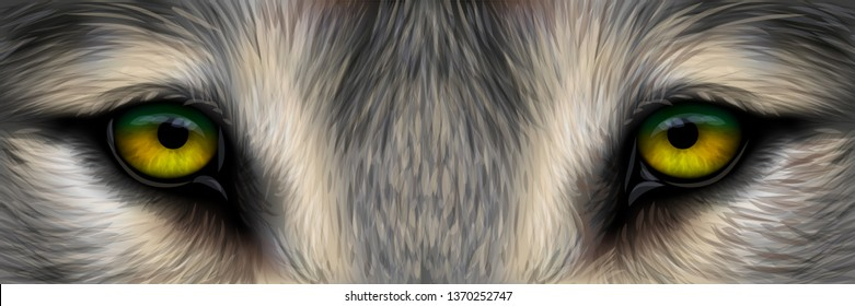 The eyes of a wolf. Realistic graphic vector drawing of the eyes of a wild wolf closeup.