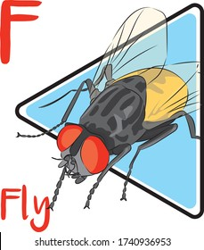 F for fly, an insect with big eyes and like being around dirty places