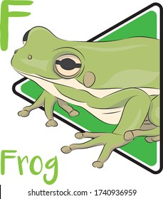 F for frog, the animal that can be found anywhere and Frog is an amphibian animal that doing metamorphosis in its life cycle