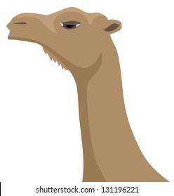 Face camel