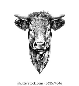 Cow Face Images Stock Photos Vectors Shutterstock