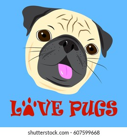 Face of cute pug on blue background.