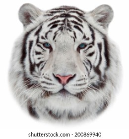 Face of white bengal tiger, isolated on white background. Amazing mask of the biggest cat. Wild beauty of the most dangerous and mighty beast of the world. Amazing vector image in mosaic style.