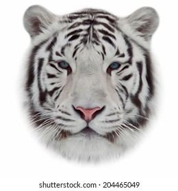 Face of white bengal tiger, isolated on white background. Mask of the biggest cat of the world. Wild beauty of the most dangerous and mighty beast. Amazing vector image in oil painting style.