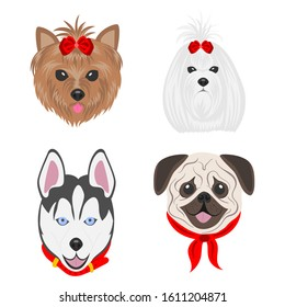 Faces of dogs of different breeds. Dogs drawn in pop art style. Set of flat vector illustrations on a white background. Yorkshire Terrier, Maltese, Husky, Pug.